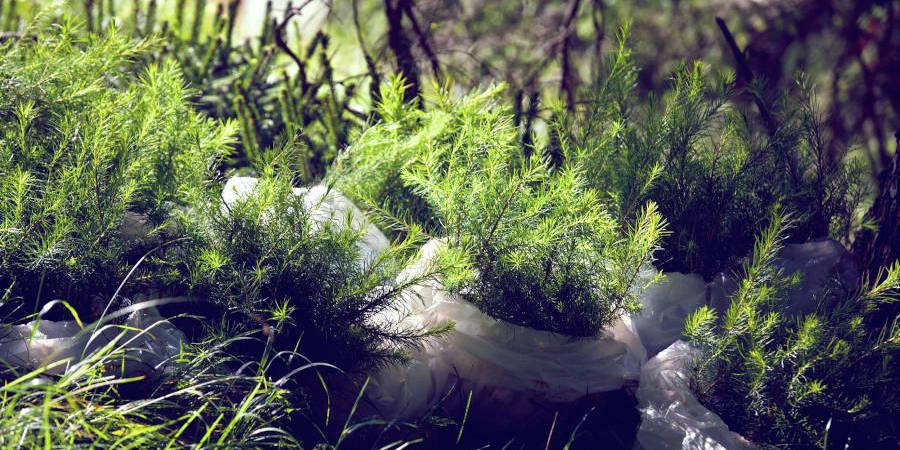Marmóndo unterstützt Klimaschutzprojekte