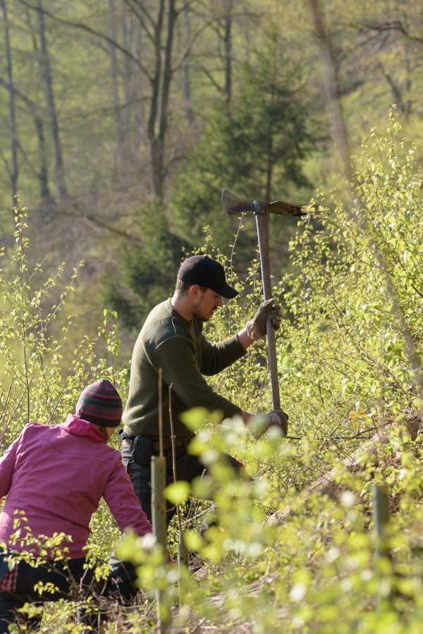 Bergwaldprojekt Werdohl - Aufforstung